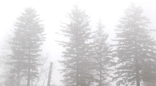 fir_fog11