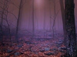george-washington-state-forest-1351791332