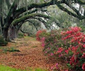 South_Carolina6f