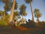 iraq-karbala-dates-650_416