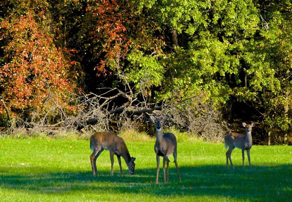 Maryland_Autumn1a
