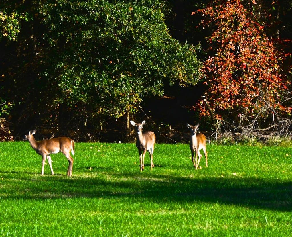 Maryland_Autumn1f