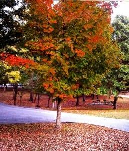 Patapsco_fall-color1