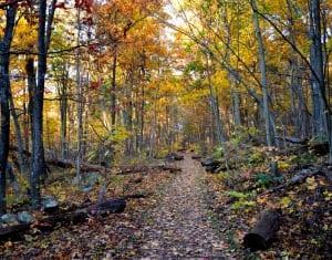 Shenandoah_trail1a