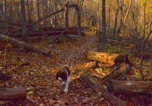 Shenandoah_trail1b