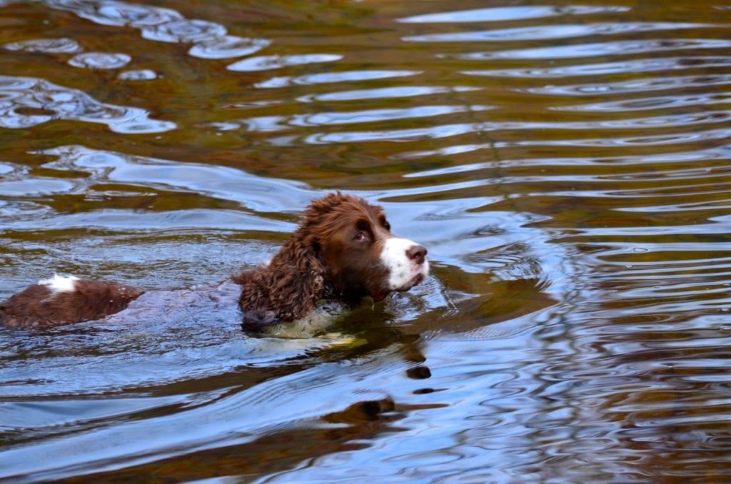 Elizabeth_Furnace-swimming1a