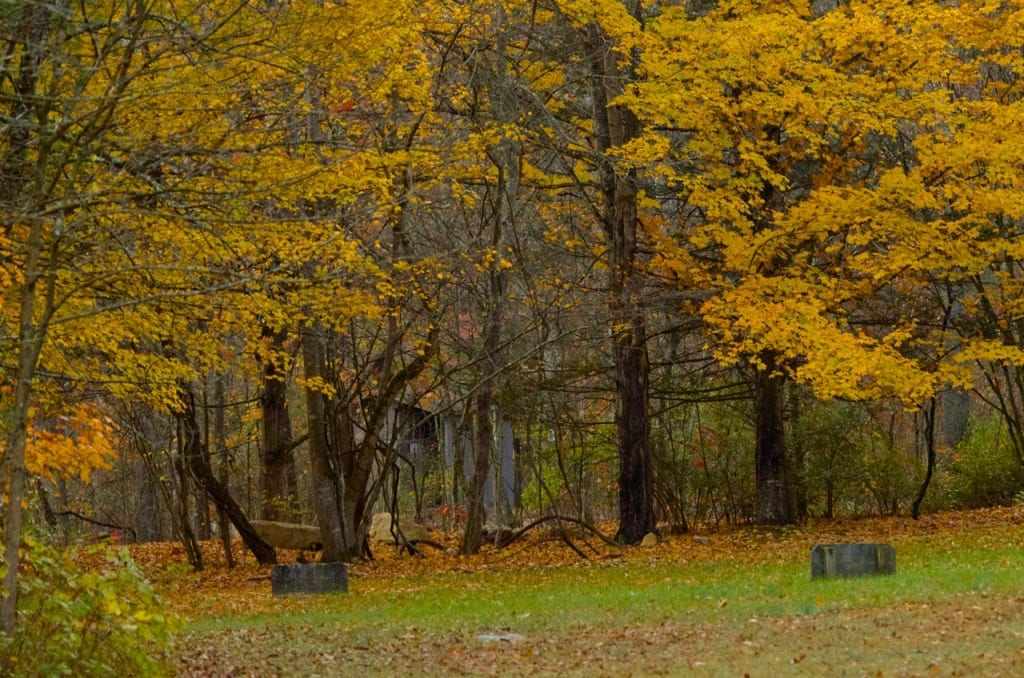 A meadow ensconced in Autumn color at the Elizabeth Furnace Campground in the George Washington National Forest: Glynn Wilson