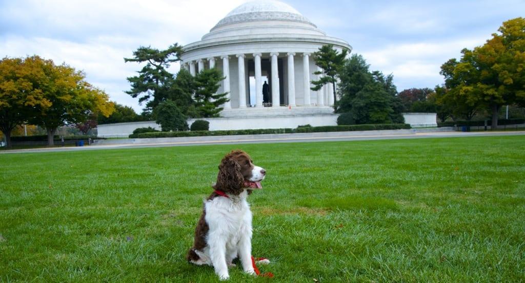 Jefferson_memorial-fall1d