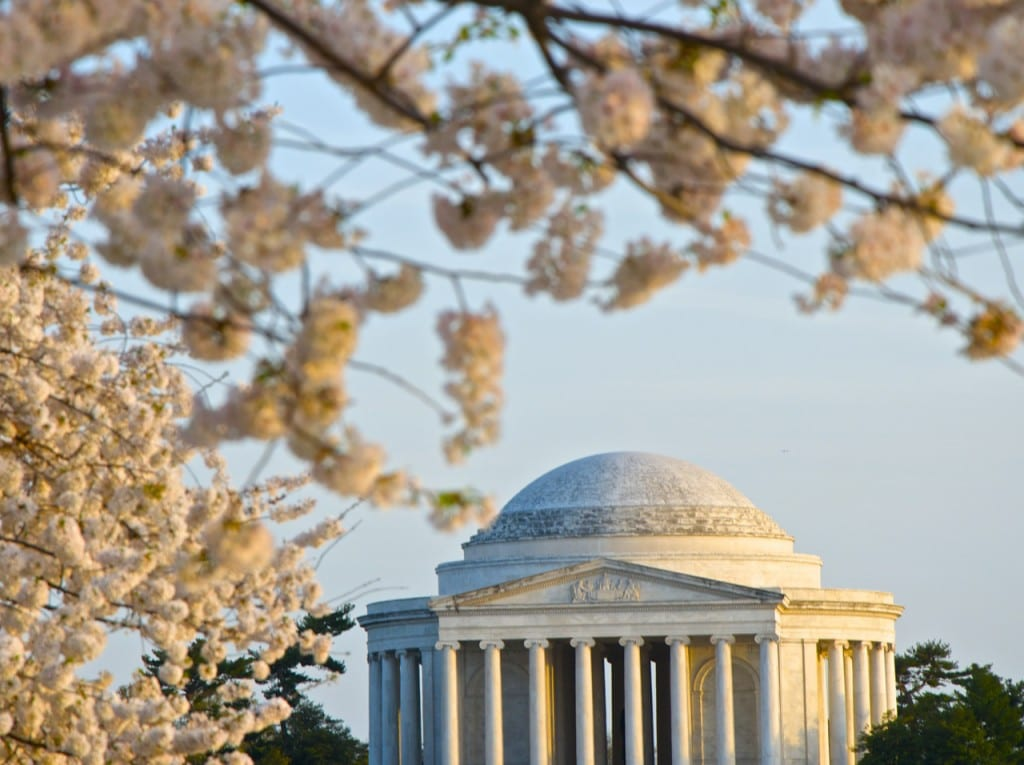 dc_cherry-blossoms1g