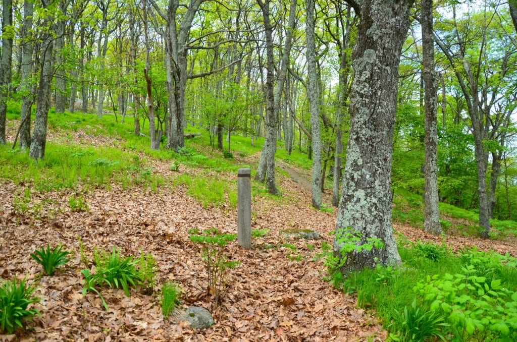 A view of the Appalachian Trail by the Big Meadows Campground in the Shenandoah National Park: Glynn Wilson