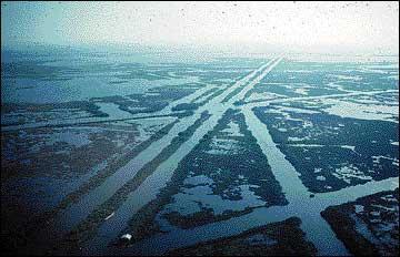 Oil industry imprint on Louisiana marshes