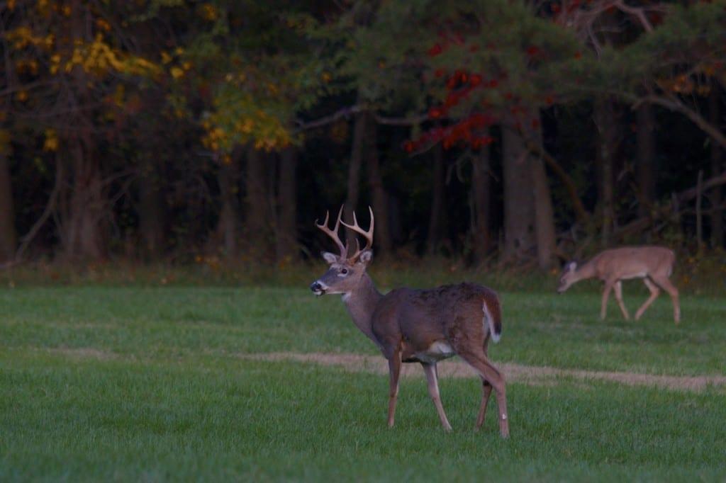 big-buck_fall-color1