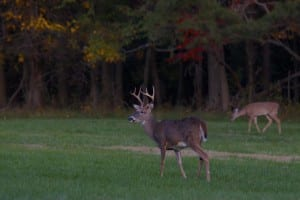 big-buck_fall-color1