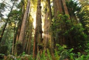 RedwoodNPJessicaWatzSTE 1200